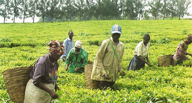 Leaders Recommit to Transforming African Agriculture as Investments
