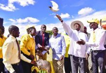 President Museveni with jubilant supporters in Koboko release a peace dove shortly after he launched internet connectivity project in West Nile and Karamoja region